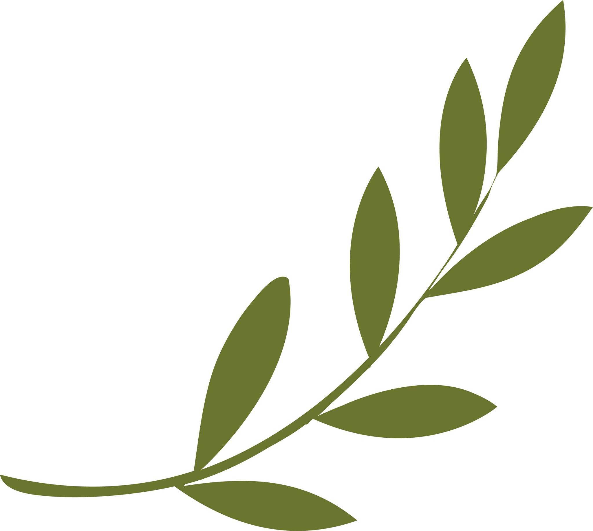 the proverbial olive branch occupy m e olive branch clipart borders olive branch clipart vector